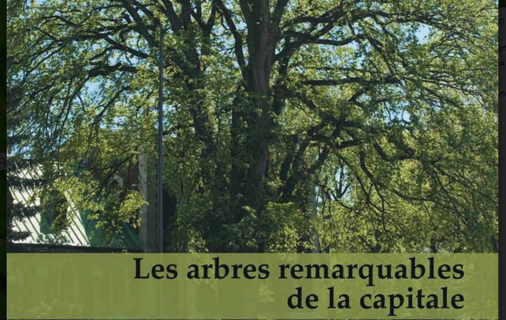rencontre avec des arbres remarquables